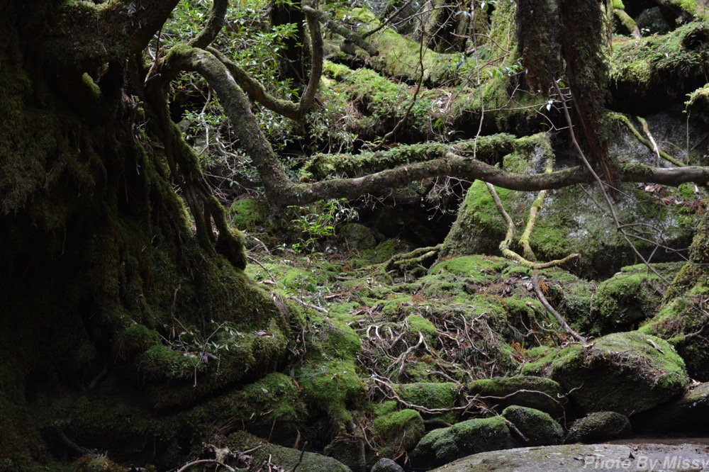 日本一周49日目【屋久島】もののけ姫の白谷雲水峡を歩く!