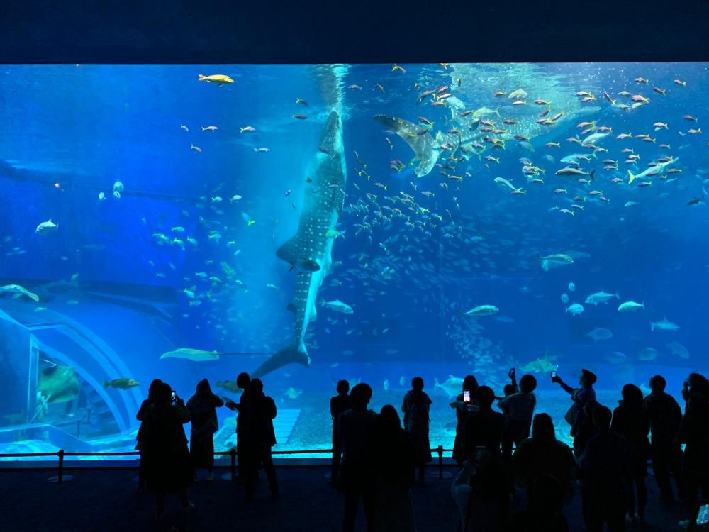 2019 日本一周車旅 沖縄3 美ら海水族館〜ジ・アッタテラス